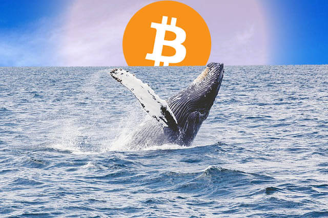 Bitcoin-Whales-Are-Losing-Their-Hold-on-the-Market